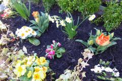 Bedding-plants